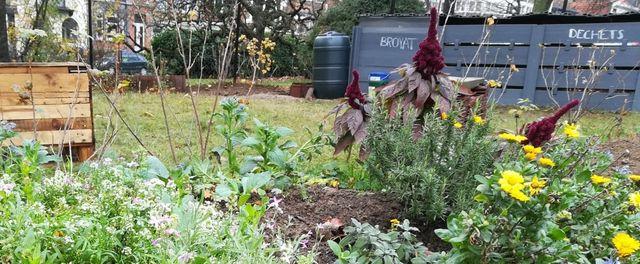 Compost_de_quartier_Magnolia_2